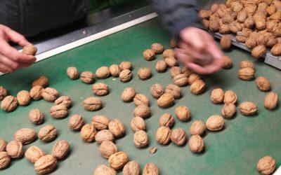 Méthode de triage des noix