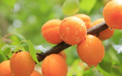 Fruits d'été farcis aux noix
